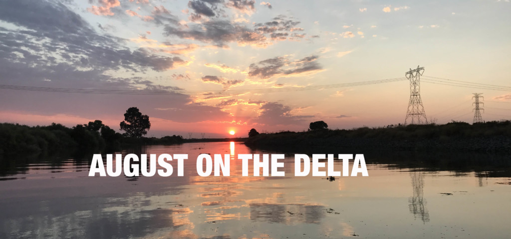 August 2017 Delta Bass Fishing Report